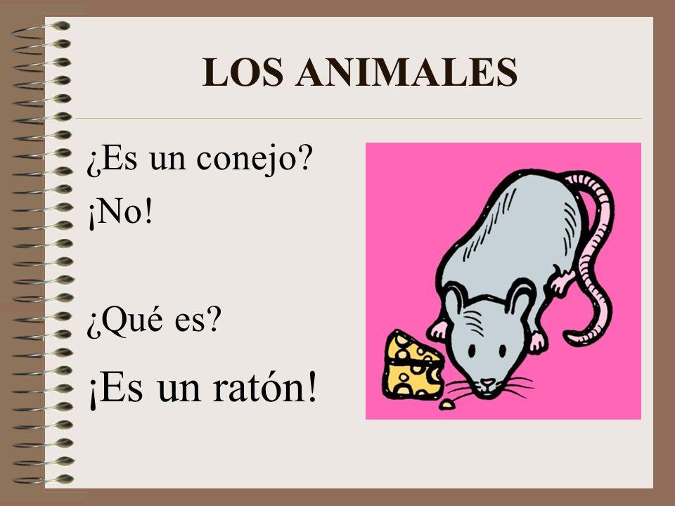 LOS ANIMALES ¿Es un caballo? ¡Sí, es un caballo!