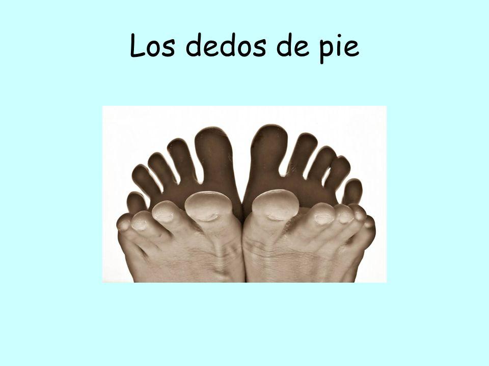 Los dedos de pie