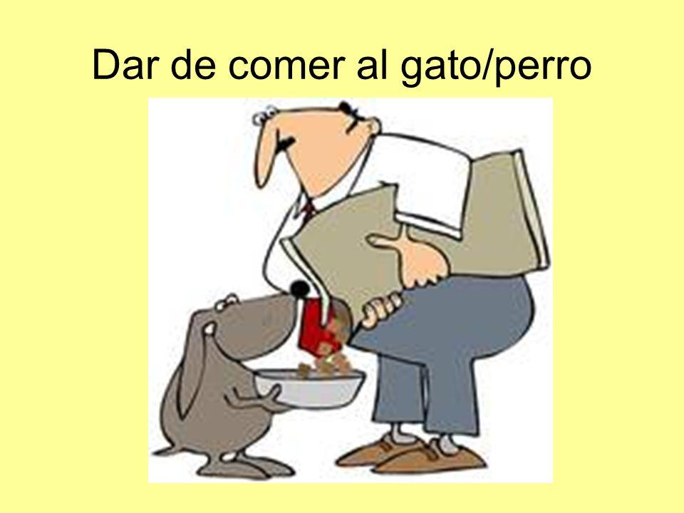 Dar de comer al gato/perro