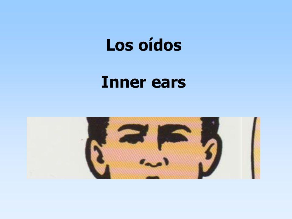 Los oídos Inner ears