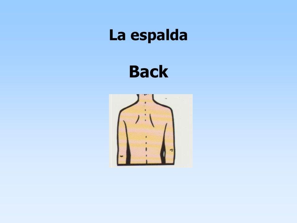La espalda Back