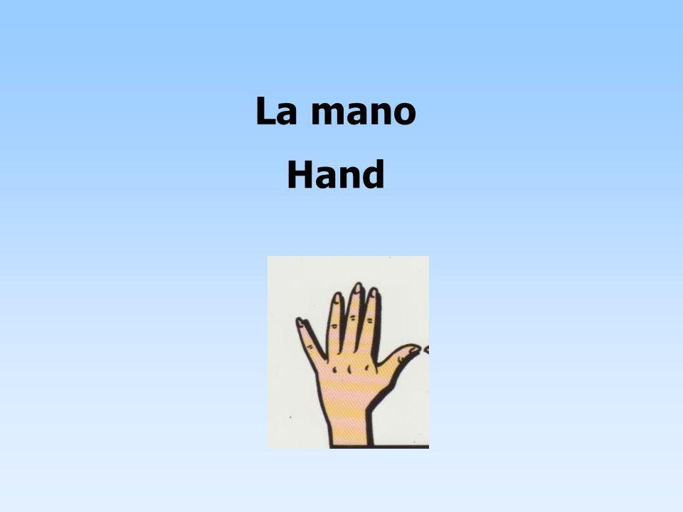 La mano Hand