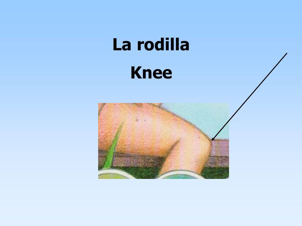 La rodilla Knee