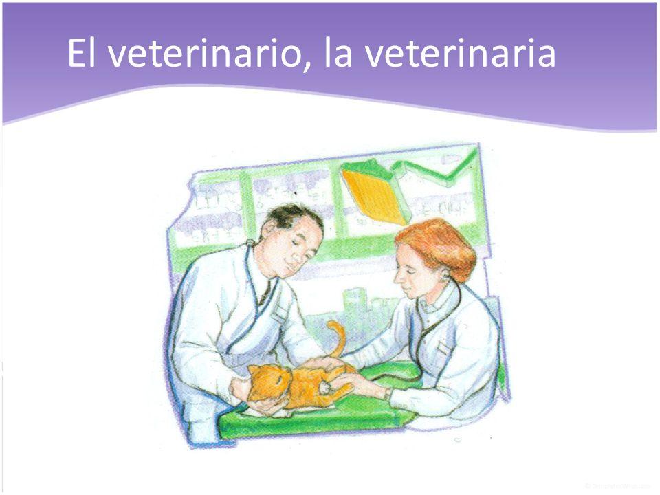 El veterinario, la veterinaria