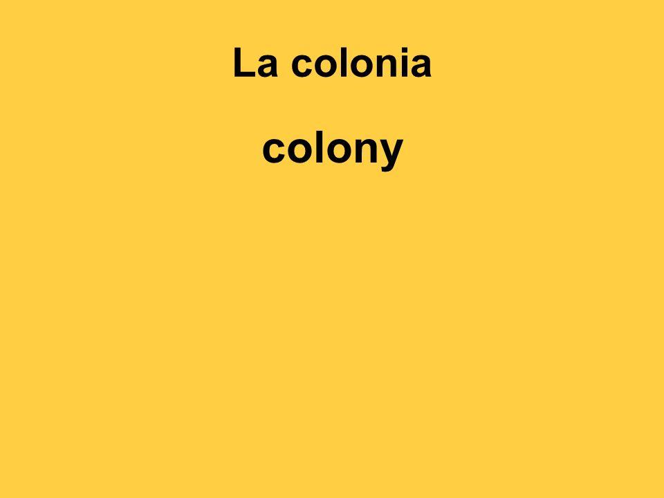 La colonia colony