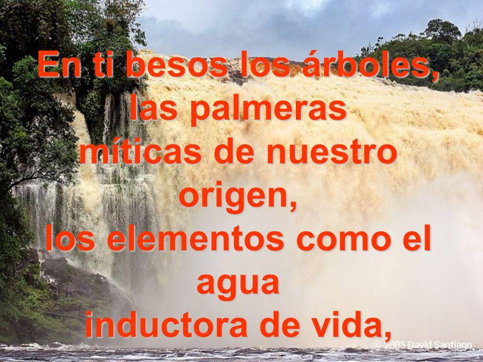 SALTO HACHA En ti conozco al acestral Canaimaespíritu todo poderoso de infinitud superior fuente inagotable de la materia y de lo divino…
