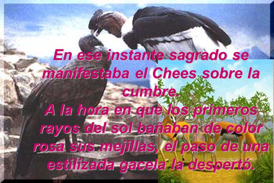 Soño en el cielo del Cóndor andino, el ave voladora mas grande del mundo. Su plumaje es casi totalmente negro con reflejos metálicos y una faja blancu