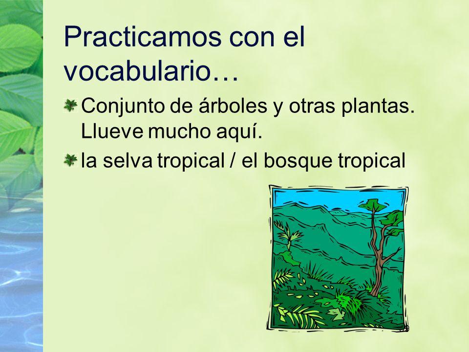 59 Practicamos con el vocabulario… Conjunto de árboles y otras plantas. Llueve mucho aquí. la selva tropical / el bosque tropical