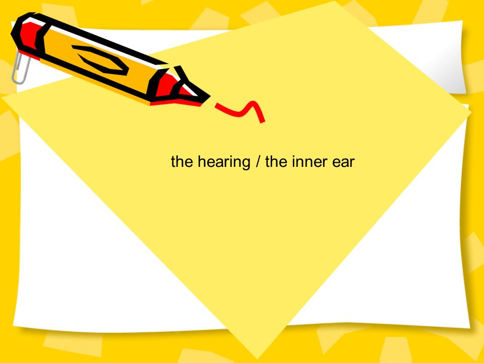 the hearing / the inner ear