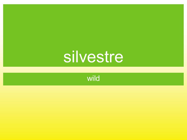 silvestre wild