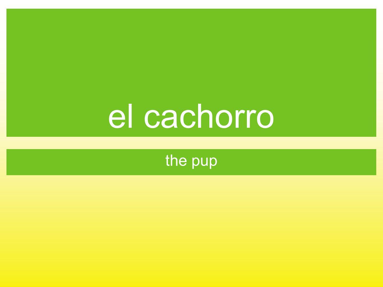 el cachorro the pup