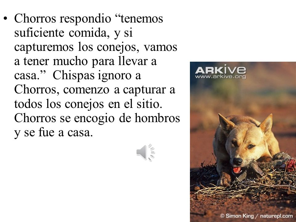 Un dia, despues de la caza de comida para la semana, Chispas y Chorros habia comido suficiente. De repente Chispas vio un campo abierto lleno de conej