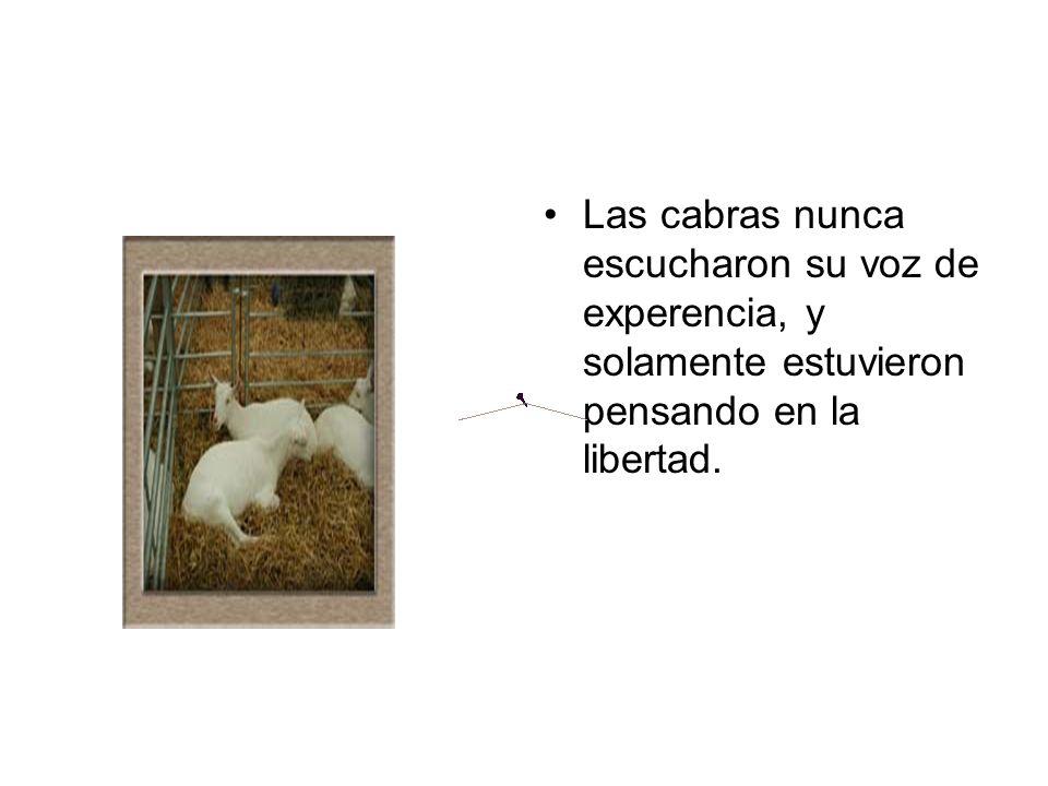 Las cabras nunca escucharon su voz de experencia, y solamente estuvieron pensando en la libertad.