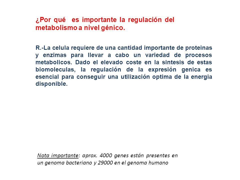 ¿Por qué es importante la regulación del metabolismo a nivel génico. R.-La celula requiere de una cantidad importante de proteinas y enzimas para llev