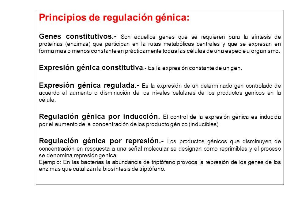Principios de regulación génica: Genes constitutivos.- Son aquellos genes que se requieren para la síntesis de proteínas (enzimas) que participan en l