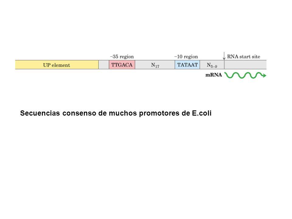 Secuencias consenso de muchos promotores de E.coli