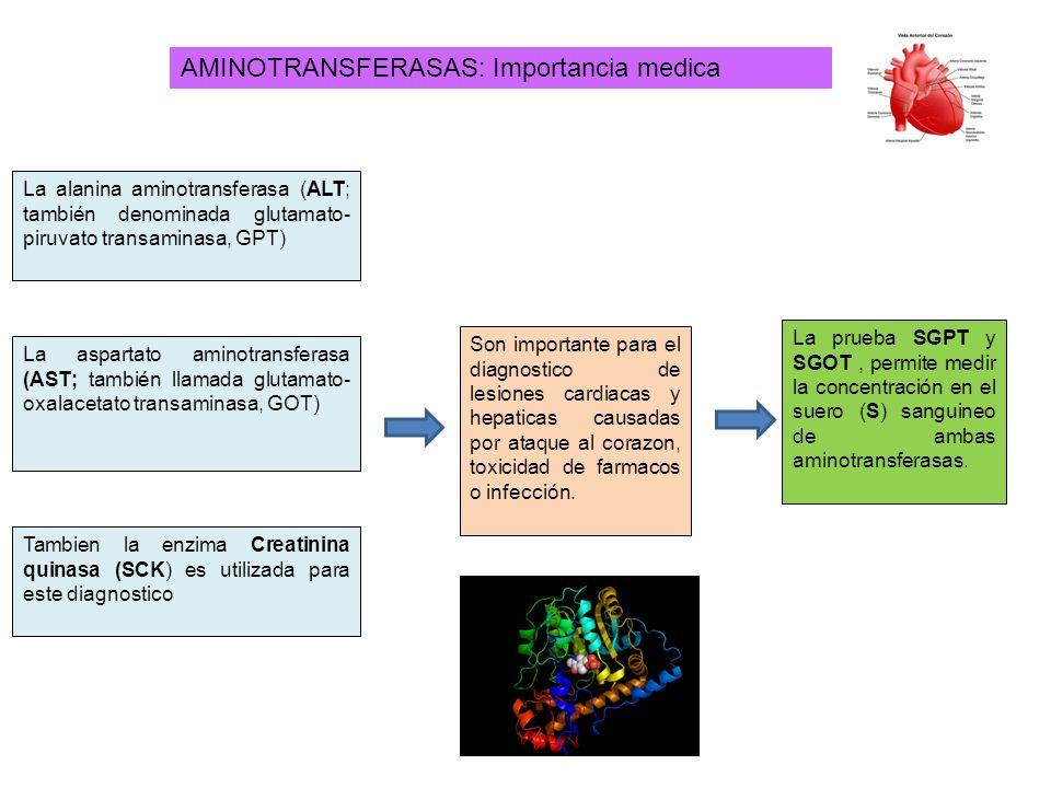 AMINOTRANSFERASAS: Importancia medica La prueba SGPT y SGOT, permite medir la concentración en el suero (S) sanguineo de ambas aminotransferasas. La a