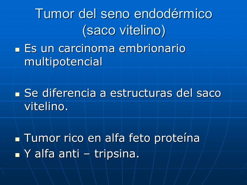 Tumor del seno endodérmico (saco vitelino) Es un carcinoma embrionario multipotencial Es un carcinoma embrionario multipotencial Se diferencia a estru