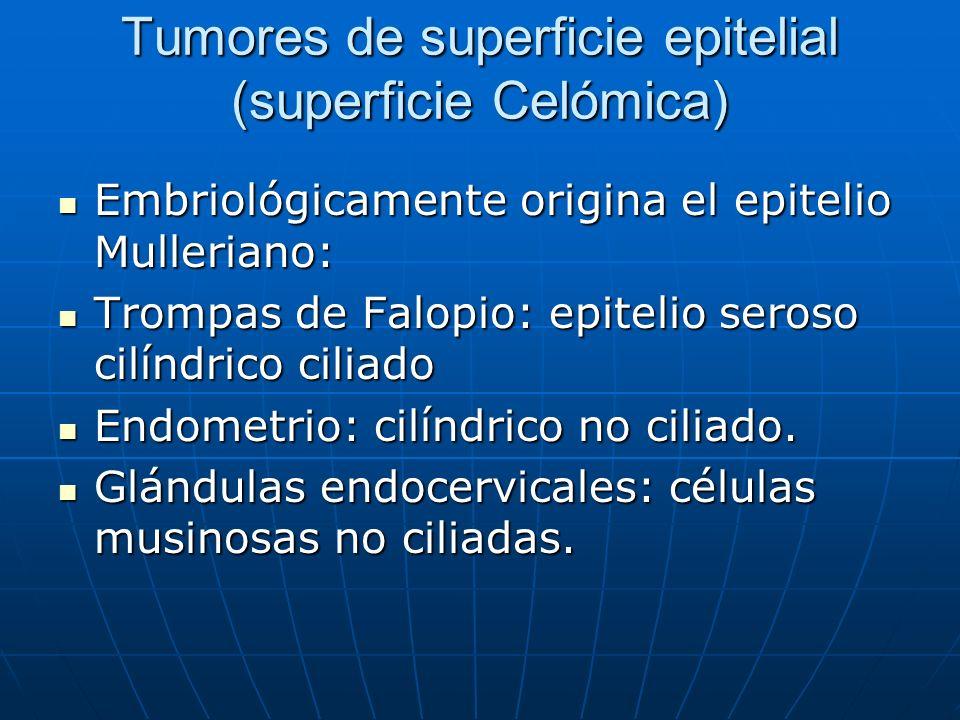 Tumores de superficie epitelial (superficie Celómica) Embriológicamente origina el epitelio Mulleriano: Embriológicamente origina el epitelio Mulleria