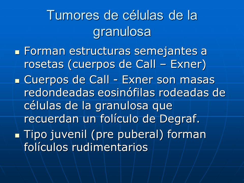 Tumores de células de la granulosa Forman estructuras semejantes a rosetas (cuerpos de Call – Exner) Forman estructuras semejantes a rosetas (cuerpos