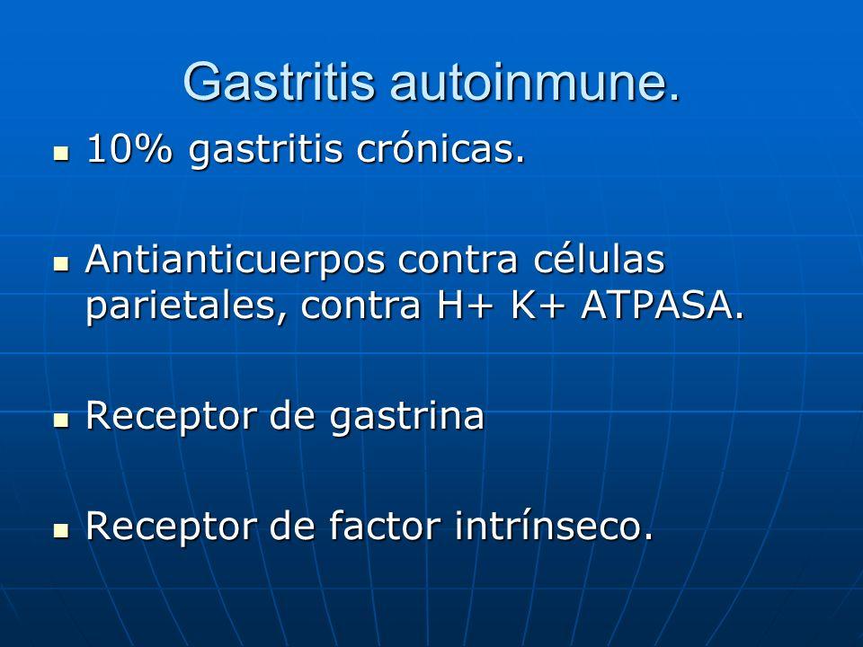 Gastritis autoinmune. 10% gastritis crónicas. 10% gastritis crónicas. Antianticuerpos contra células parietales, contra H+ K+ ATPASA. Antianticuerpos