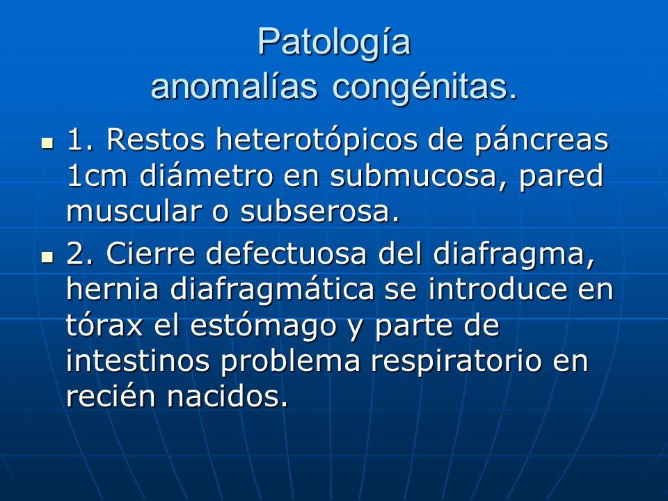 Patología anomalías congénitas. 1. Restos heterotópicos de páncreas 1cm diámetro en submucosa, pared muscular o subserosa. 1. Restos heterotópicos de
