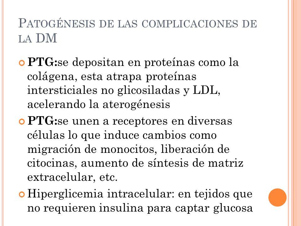 P ATOGÉNESIS DE LAS COMPLICACIONES DE LA DM PTG: se depositan en proteínas como la colágena, esta atrapa proteínas intersticiales no glicosiladas y LDL, acelerando la aterogénesis PTG: se unen a receptores en diversas células lo que induce cambios como migración de monocitos, liberación de citocinas, aumento de síntesis de matriz extracelular, etc.