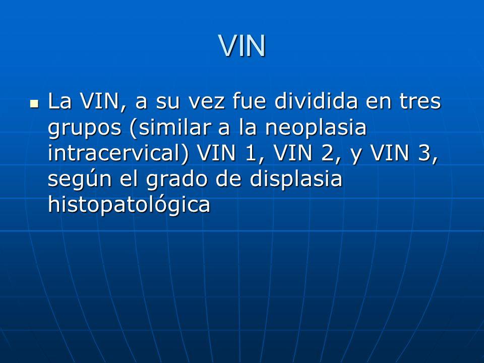 VIN La VIN, a su vez fue dividida en tres grupos (similar a la neoplasia intracervical) VIN 1, VIN 2, y VIN 3, según el grado de displasia histopatoló
