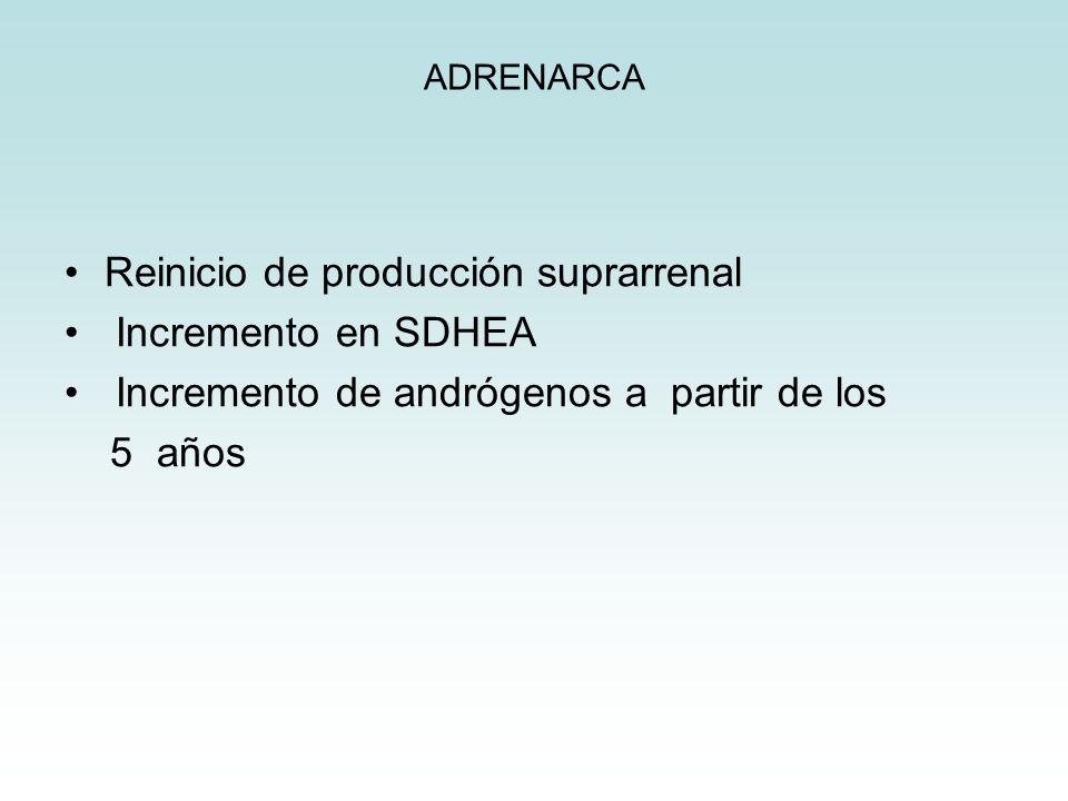 ADRENARCA Reinicio de producción suprarrenal Incremento en SDHEA Incremento de andrógenos a partir de los 5 años