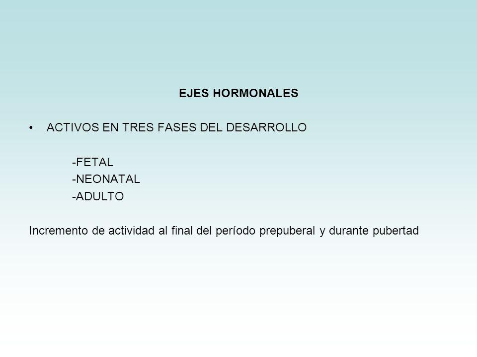 EJES HORMONALES ACTIVOS EN TRES FASES DEL DESARROLLO -FETAL -NEONATAL -ADULTO Incremento de actividad al final del período prepuberal y durante pubert