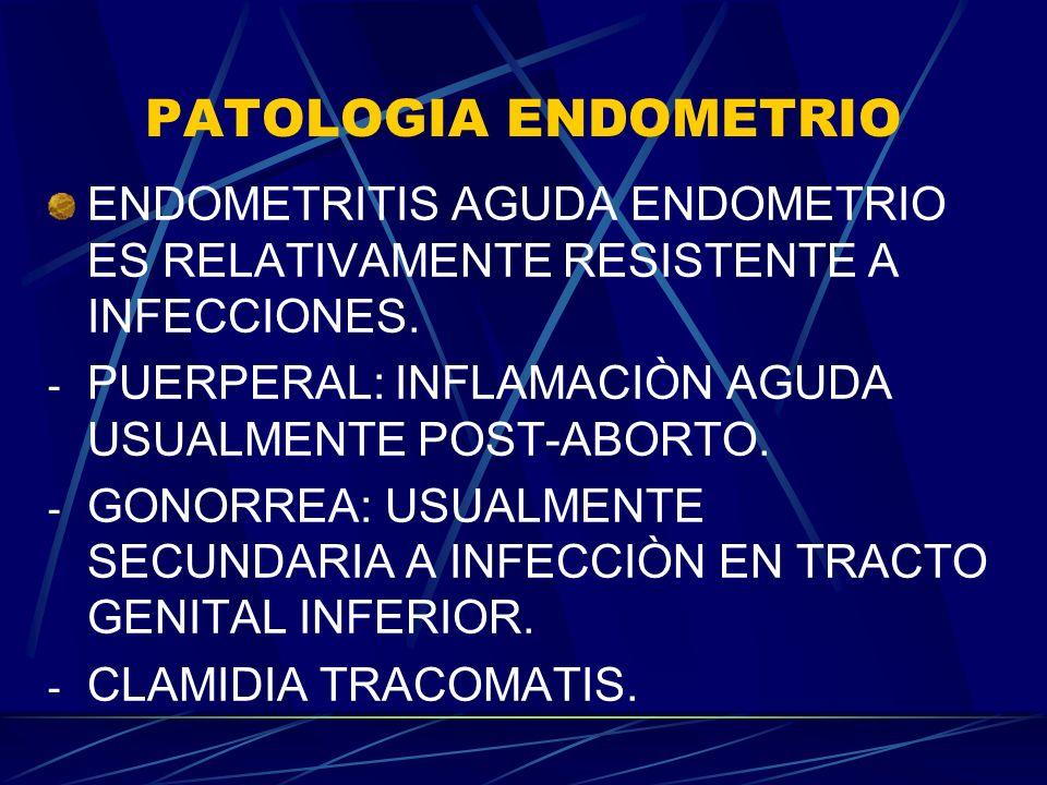 PATOLOGIA ENDOMETRIO ENDOMETRITIS AGUDA ENDOMETRIO ES RELATIVAMENTE RESISTENTE A INFECCIONES. - PUERPERAL: INFLAMACIÒN AGUDA USUALMENTE POST-ABORTO. -