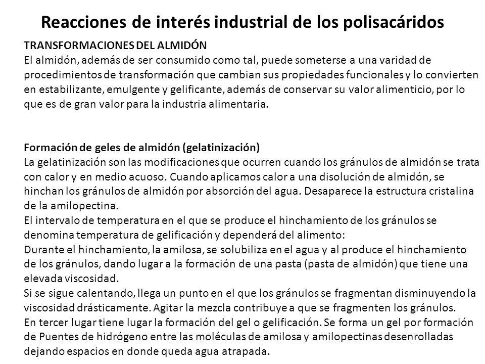 Reacciones de interés industrial de los polisacáridos TRANSFORMACIONES DEL ALMIDÓN El almidón, además de ser consumido como tal, puede someterse a una