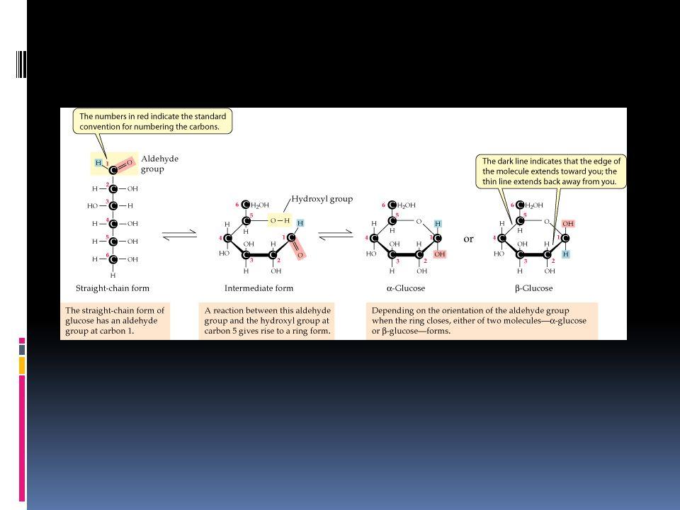 Glucosa El monosacárido más abundante de la naturaleza - Libre: suero sanguíneo y medio extracelular - Como monómero se presenta en una gran cantidad