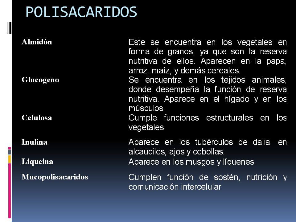 2.Polisacáridos estructurales: Estos carbohidratos participan en la formación de estructuras orgánicas, entre los más importantes tenemos a la celulos
