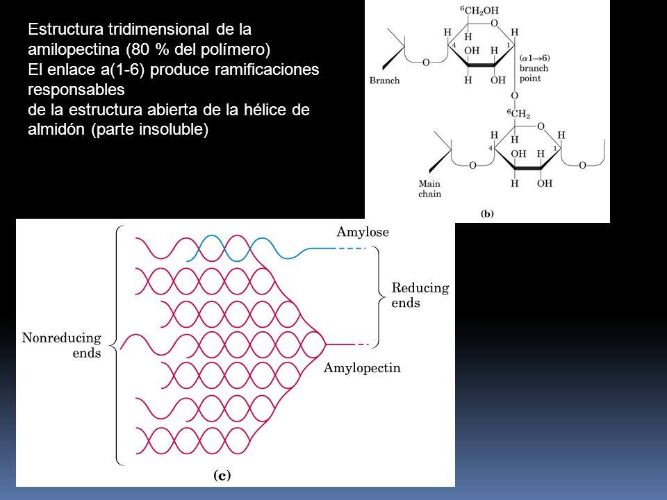 Estructura tridimensional de la amilosa. El enlace a(1-4) produce el curvamiento helicoidal del Almidón (20 % del polímero-parte soluble)
