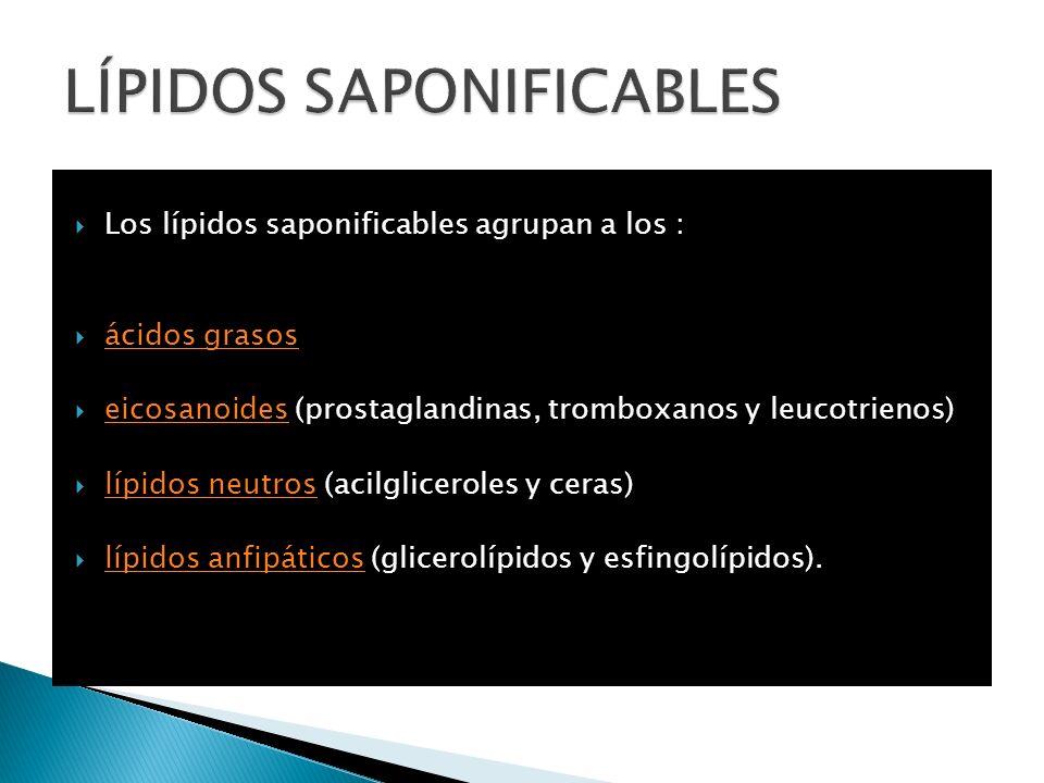 Los lípidos saponificables agrupan a los : ácidos grasos eicosanoides (prostaglandinas, tromboxanos y leucotrienos) eicosanoides lípidos neutros (acil