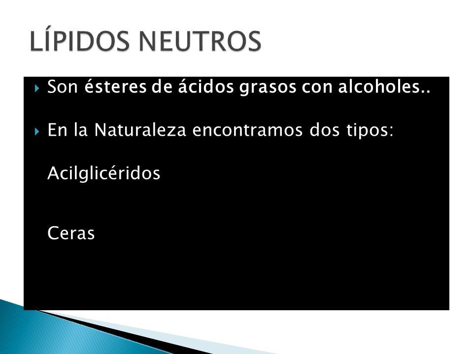 Son ésteres de ácidos grasos con alcoholes.. En la Naturaleza encontramos dos tipos: Acilglicéridos Ceras