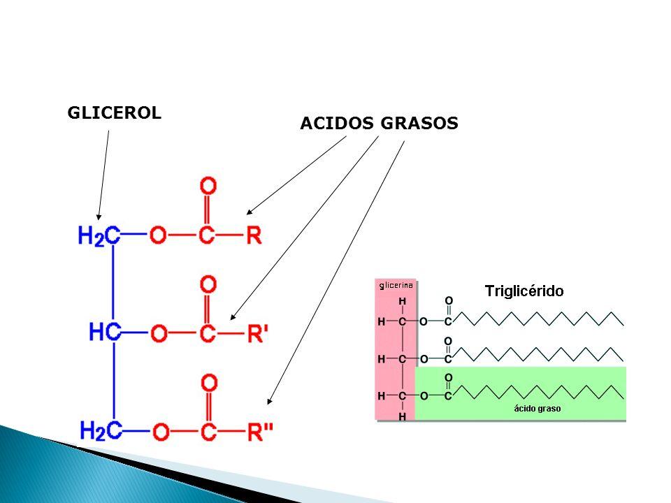 GLICEROL ACIDOS GRASOS