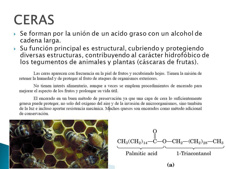 Se forman por la unión de un acido graso con un alcohol de cadena larga. Su función principal es estructural, cubriendo y protegiendo diversas estruct