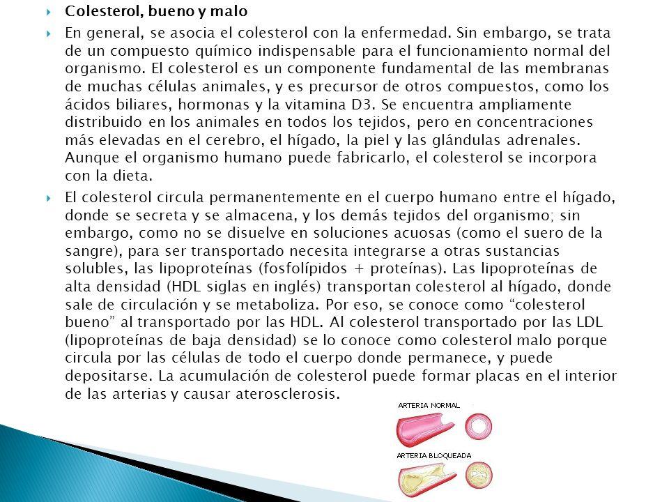 Colesterol, bueno y malo En general, se asocia el colesterol con la enfermedad. Sin embargo, se trata de un compuesto químico indispensable para el fu