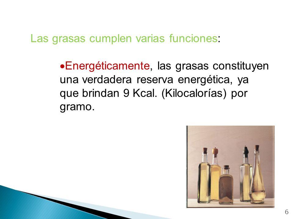 6 Las grasas cumplen varias funciones: Energéticamente, las grasas constituyen una verdadera reserva energética, ya que brindan 9 Kcal. (Kilocalorías)