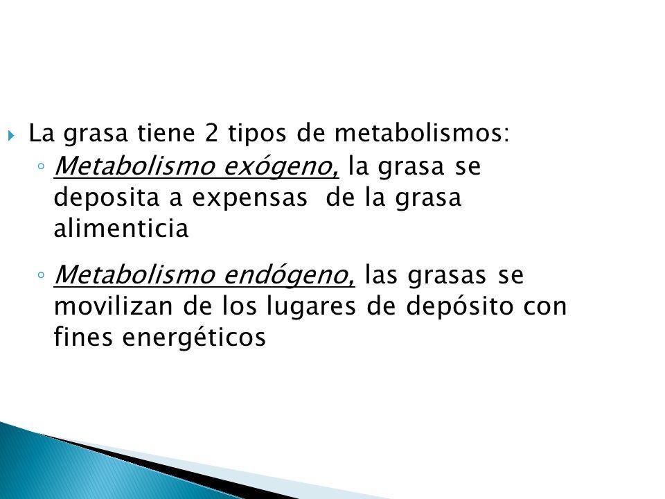 La grasa tiene 2 tipos de metabolismos: Metabolismo exógeno, la grasa se deposita a expensas de la grasa alimenticia Metabolismo endógeno, las grasas