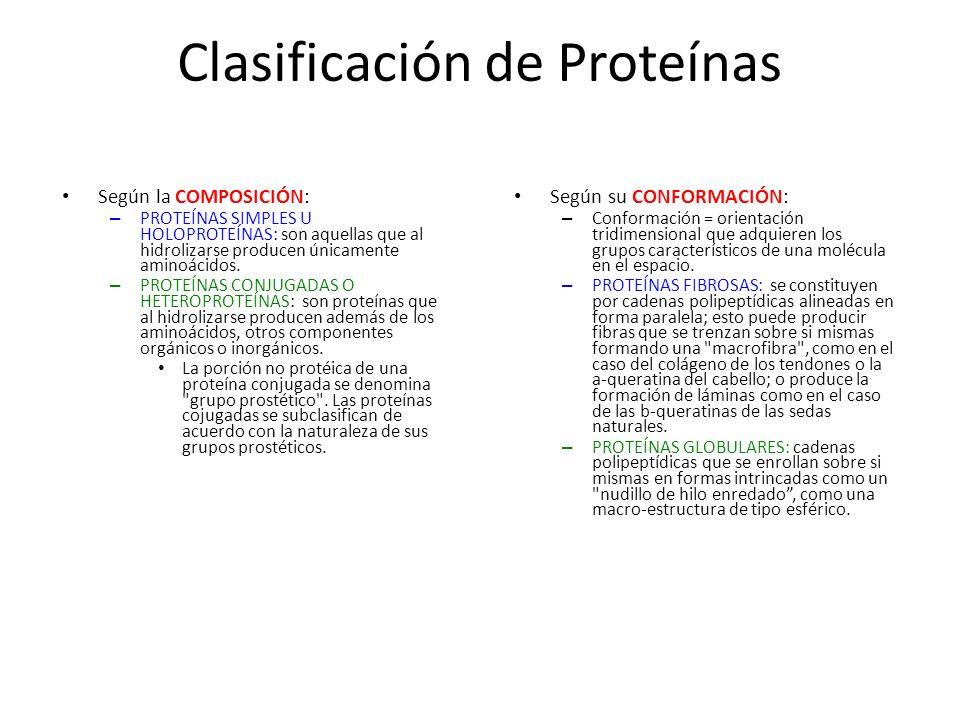 Clasificación de Proteínas Según la COMPOSICIÓN: – PROTEÍNAS SIMPLES U HOLOPROTEÍNAS: son aquellas que al hidrolizarse producen únicamente aminoácidos