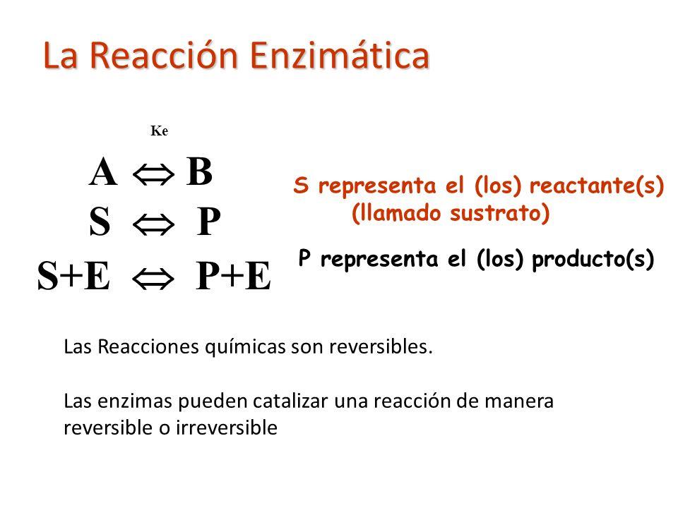 Ke A B S P S representa el (los) reactante(s) (llamado sustrato) P representa el (los) producto(s) Las Reacciones químicas son reversibles. Las enzima