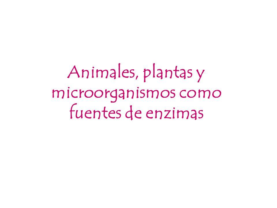 Animales, plantas y microorganismos como fuentes de enzimas