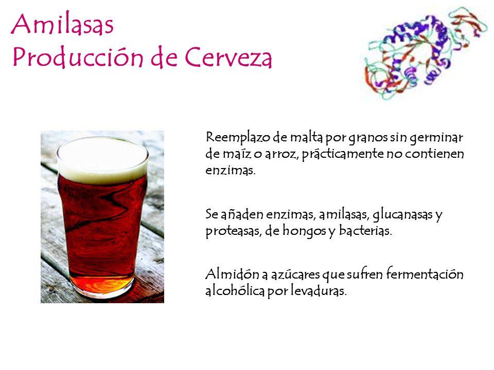 Amilasas Producción de Cerveza Reemplazo de malta por granos sin germinar de maíz o arroz, prácticamente no contienen enzimas. Se añaden enzimas, amil