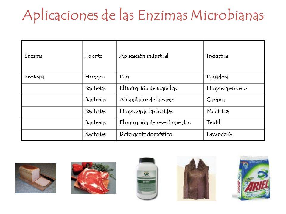 EnzimaFuenteAplicación industrialIndustria ProteasaHongosPanPanadera BacteriasEliminación de manchasLimpieza en seco BacteriasAblandador de la carneCá