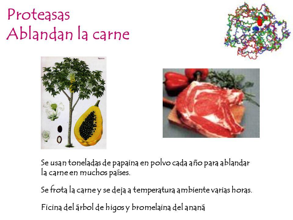 Proteasas Ablandan la carne Se usan toneladas de papaina en polvo cada año para ablandar la carne en muchos países. Ficina del árbol de higos y bromel