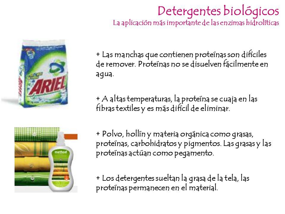 Detergentes biológicos La aplicación más importante de las enzimas hidrolíticas + Las manchas que contienen proteínas son difíciles de remover. Proteí