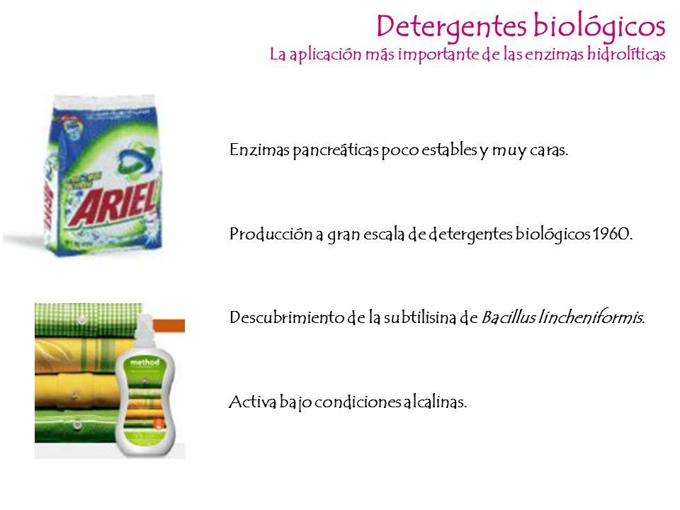 Detergentes biológicos La aplicación más importante de las enzimas hidrolíticas Descubrimiento de la subtilisina de Bacillus lincheniformis. Producció